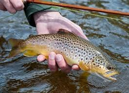 Salmon & Brown trout fishing, River Conwy